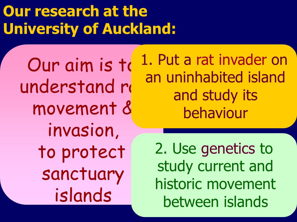 Our aim is to understand rat movement & invasion, to protect sanctuary islands Our research at the University of Auckland: 1.