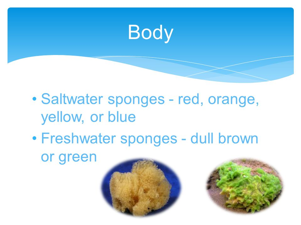 Extract food from water, pulled through its pores Diet consists of bacteria, protists, algae, and other materials How and what they eat?