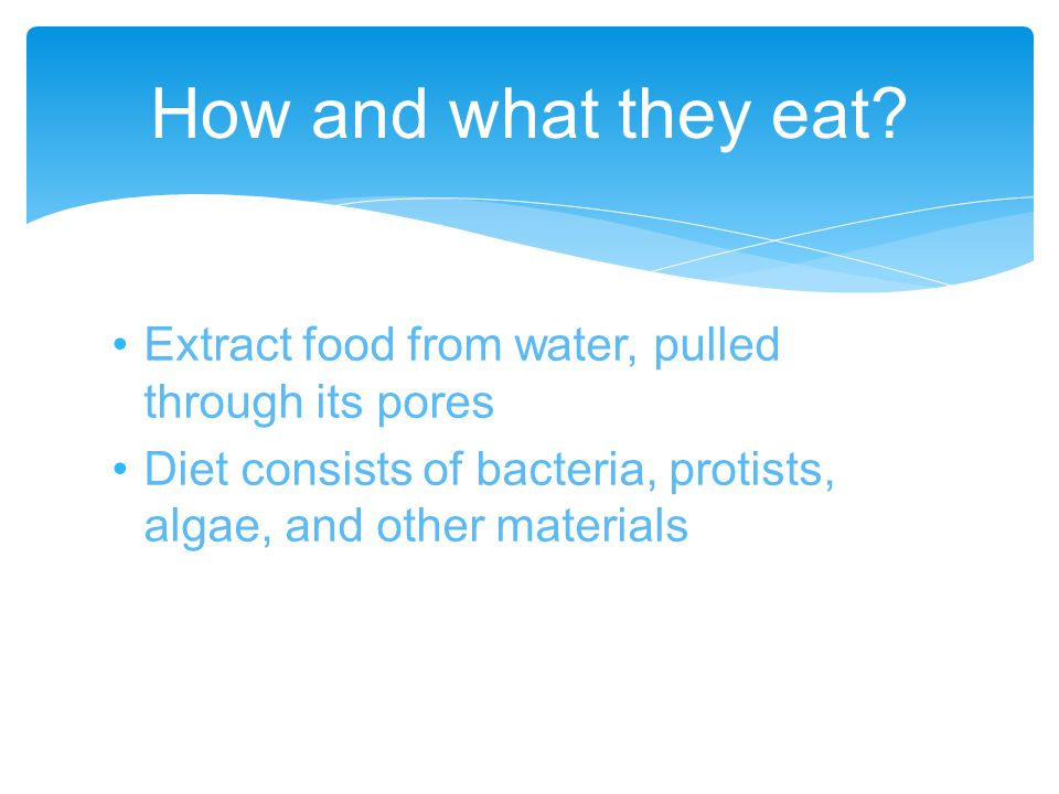 Extract oxygen from the water through pores How they get oxygen