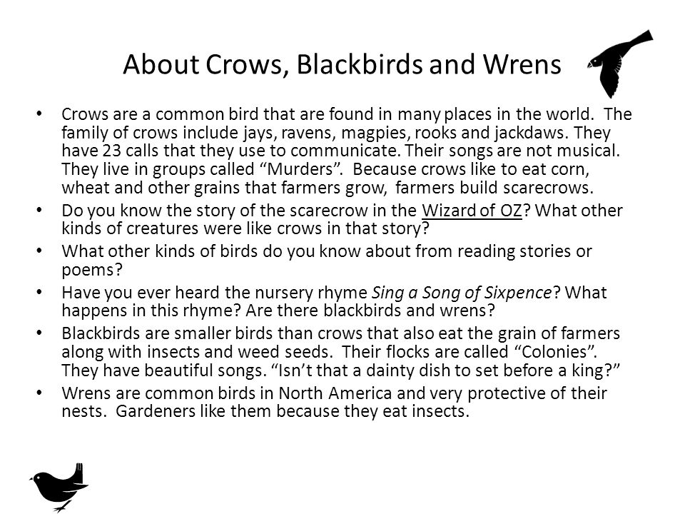 About Crows, Blackbirds and Wrens Crows are a common bird that are found in many places in the world.