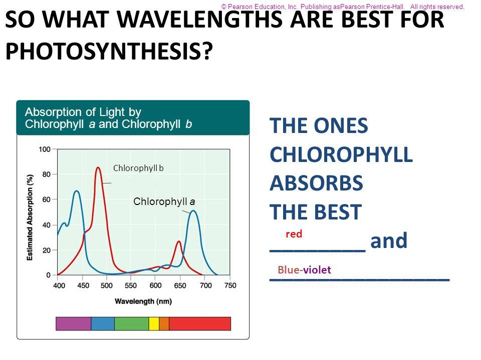Chlorophyll a Chlorophyll b Absorption of Light by Chlorophyll a and Chlorophyll b © Pearson Education, Inc.