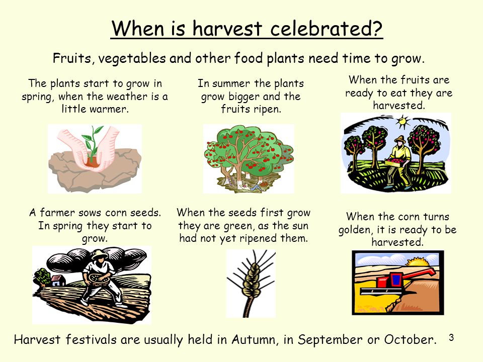 3 When is harvest celebrated. Fruits, vegetables and other food plants need time to grow.