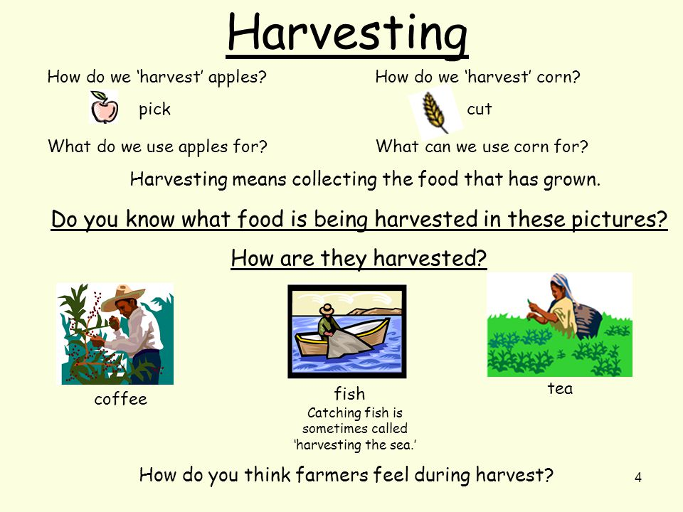 4 Harvesting How do we 'harvest' apples. pick What do we use apples for.