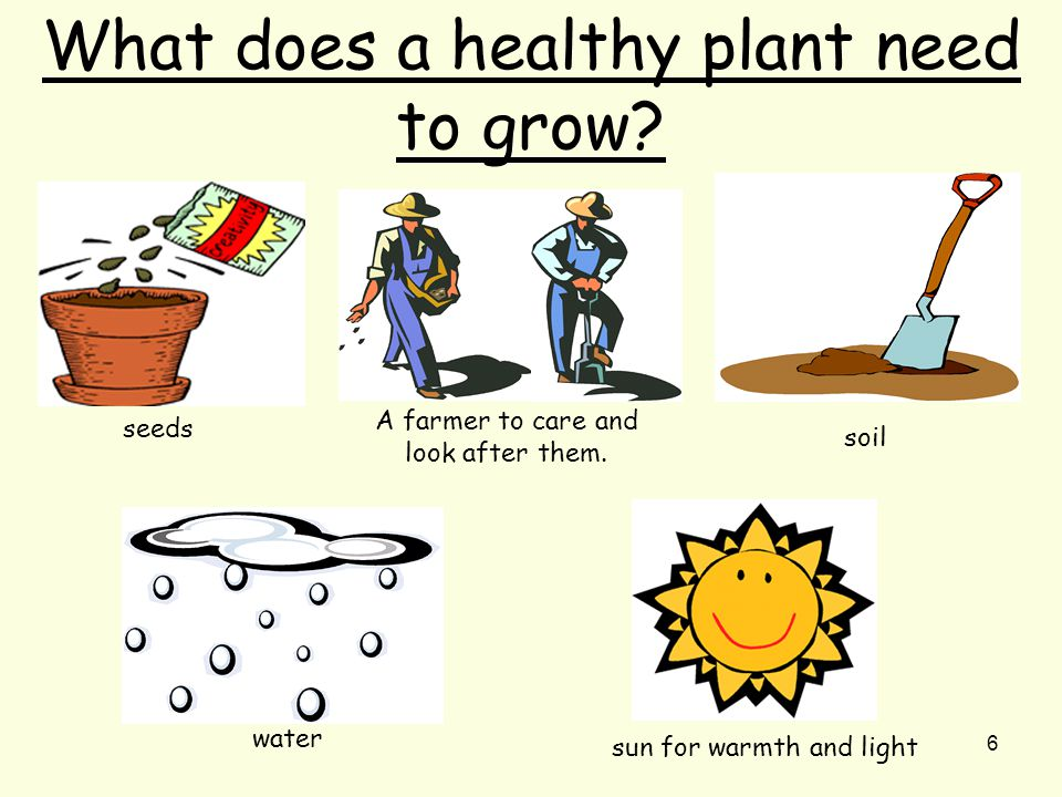6 What does a healthy plant need to grow. seeds A farmer to care and look after them.