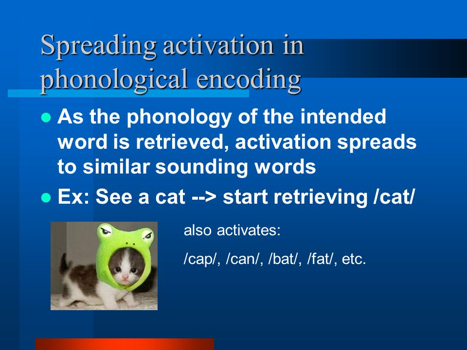 Spreading activation in phonological encoding As the phonology of the intended word is retrieved, activation spreads to similar sounding words Ex: See a cat --> start retrieving /cat/ also activates: /cap/, /can/, /bat/, /fat/, etc.