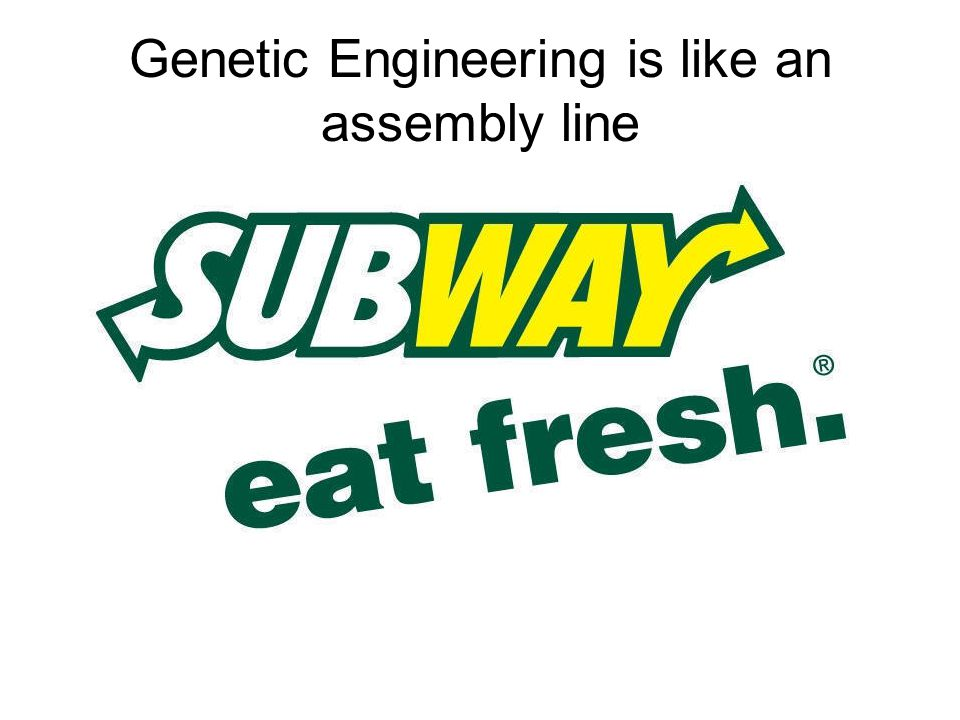 Genetic Engineering is like an assembly line