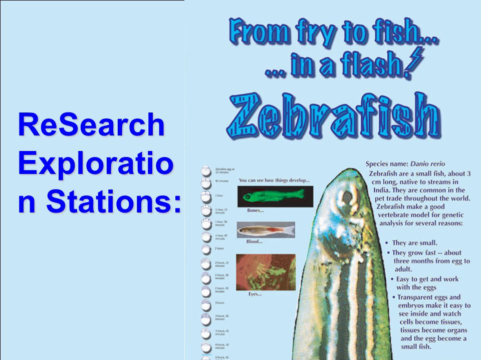 December 4, 2002 Biotechnology Workshop IAFE Annual Conference ReSearch Exploratio n Stations: