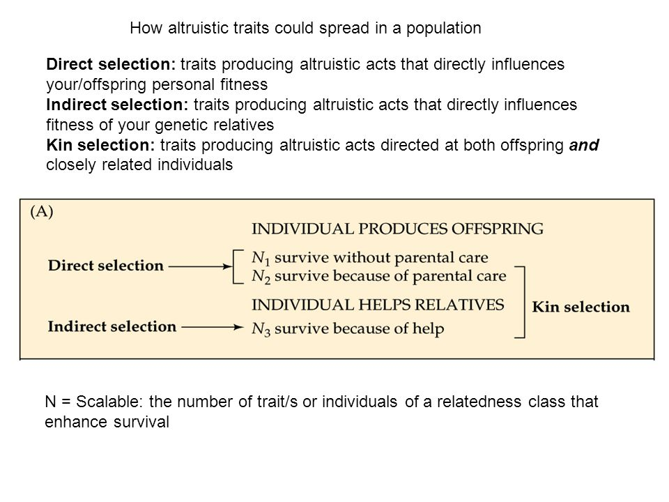 Direct selection: traits producing altruistic acts that directly influences your/offspring personal fitness Indirect selection: traits producing altru
