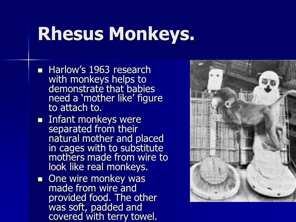 Rhesus Monkeys.