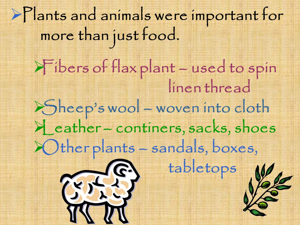  Plants and animals were important for more than just food.  Fibers of flax plant – used to spin linen thread  Sheep's wool – woven into cloth  Le