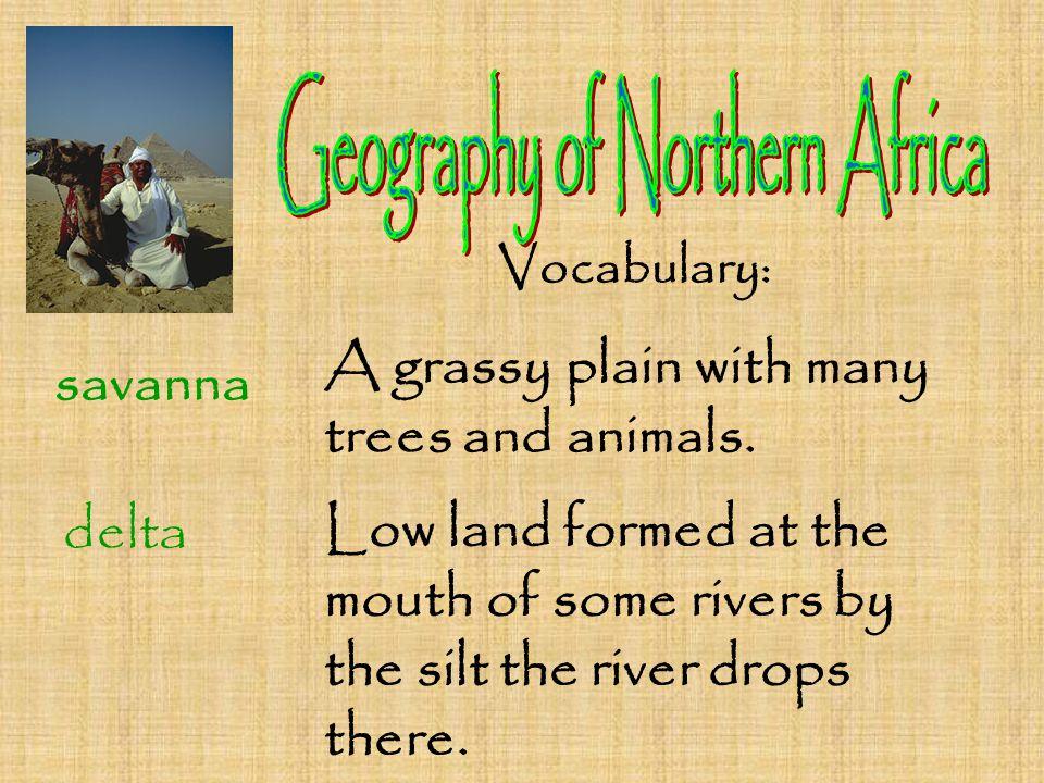 Vocabulary: savanna A grassy plain with many trees and animals.