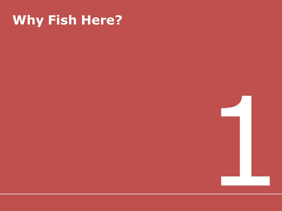Why Fish Here 1