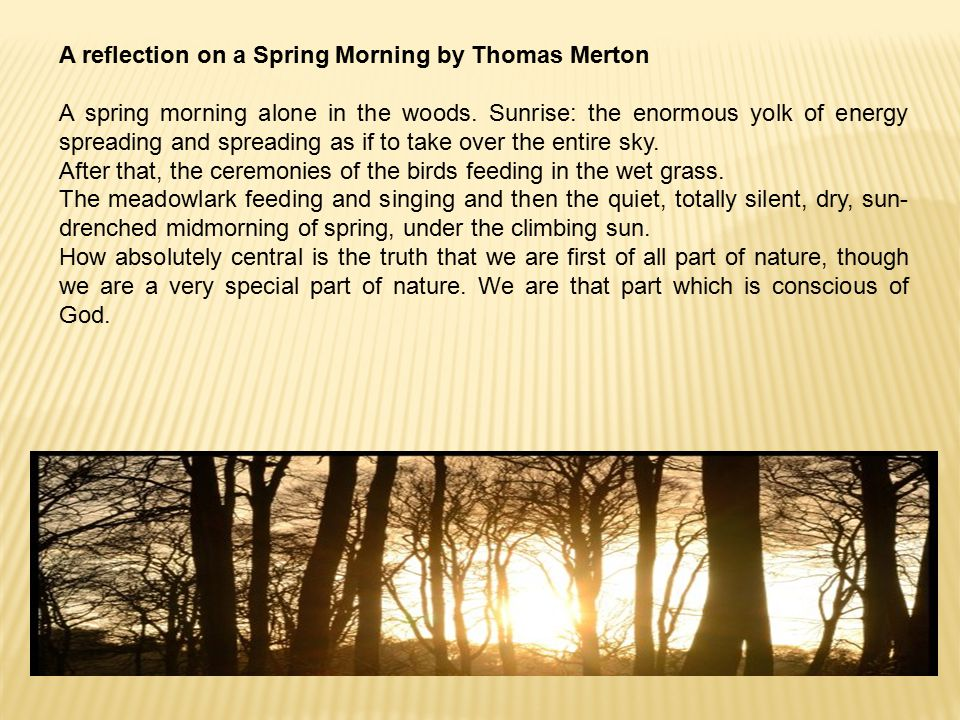 A reflection on a Spring Morning by Thomas Merton A spring morning alone in the woods.