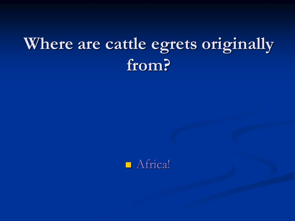 Where are cattle egrets originally from Africa!