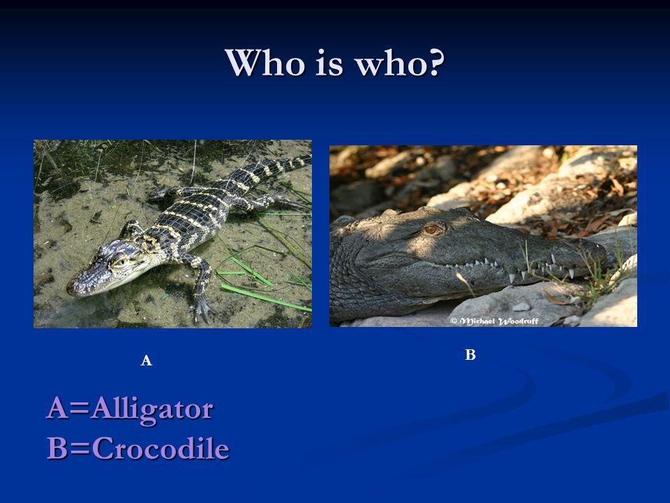 Who is who A B A=Alligator B=Crocodile