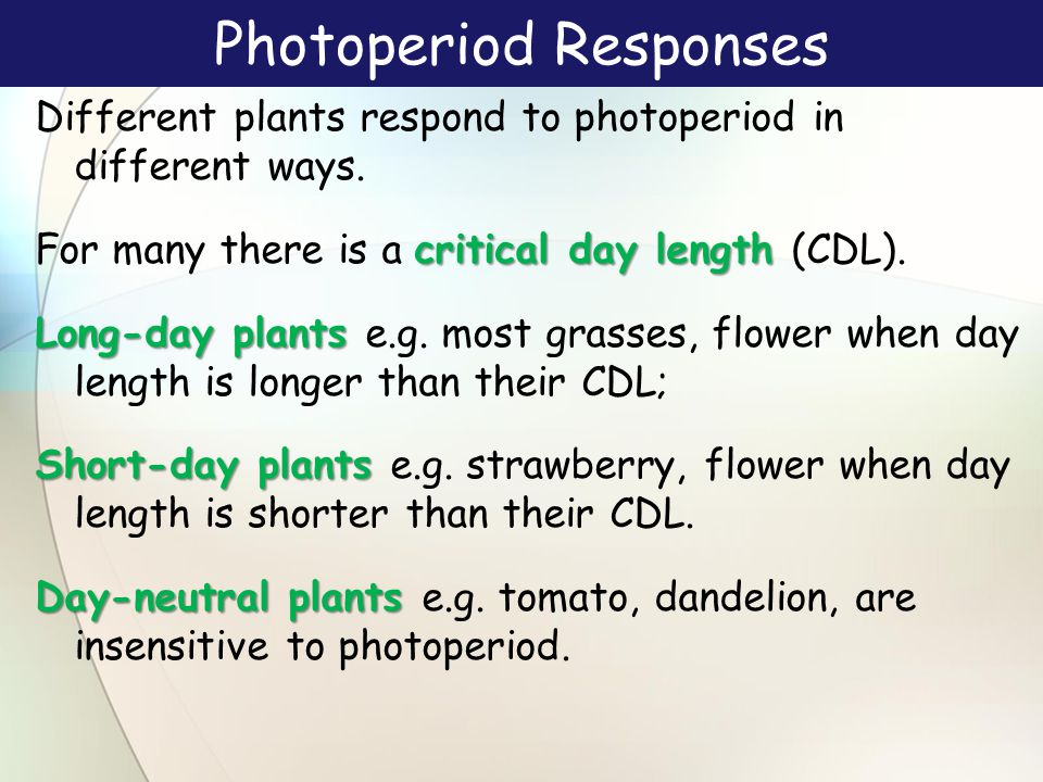 Photoperiod Responses Different plants respond to photoperiod in different ways.
