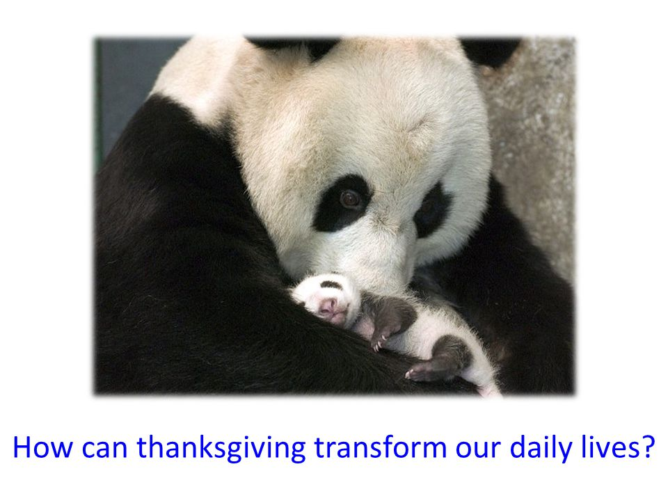 How can thanksgiving transform our daily lives