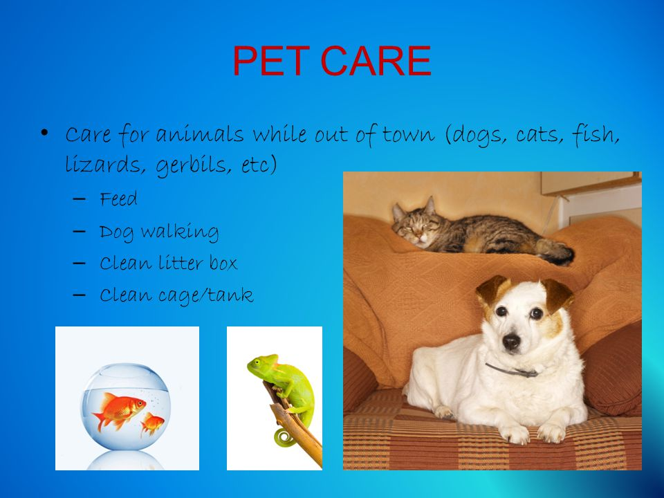 PET CARE Care for animals while out of town (dogs, cats, fish, lizards, gerbils, etc) – Feed – Dog walking – Clean litter box – Clean cage/tank