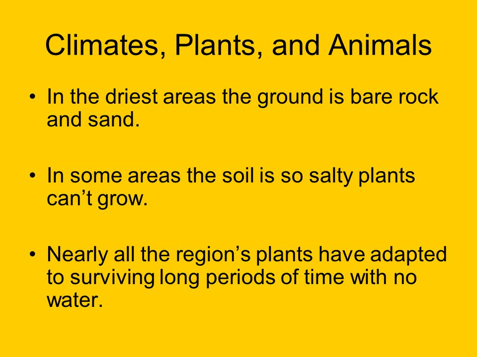 Climates, Plants, and Animals In the driest areas the ground is bare rock and sand.