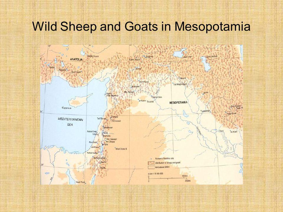 Wild Sheep and Goats in Mesopotamia