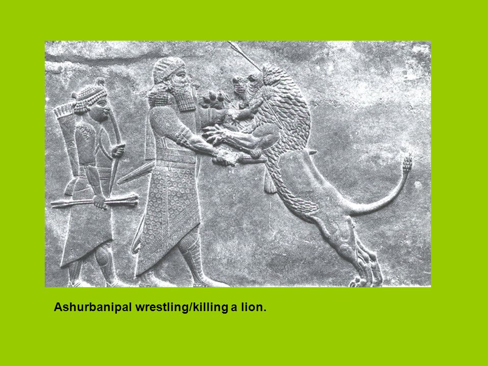 Ashurbanipal wrestling/killing a lion.