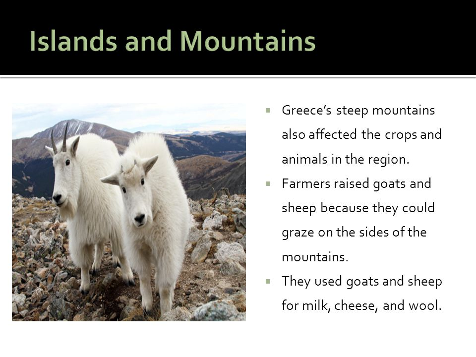  Greece's steep mountains also affected the crops and animals in the region.  Farmers raised goats and sheep because they could graze on the sides o