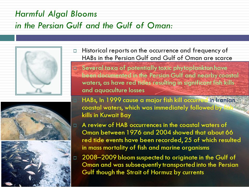  Historical reports on the occurrence and frequency of HABs in the Persian Gulf and Gulf of Oman are scarce  Several taxa of potentially toxic phytoplankton have been documented in the Persian Gulf and nearby coastal waters, as have red tides resulting in significant fish kills and aquaculture losses  HABs, In 1999 cause a major fish kill occurred in Iranian coastal waters, which was immediately followed by fish kills in Kuwait Bay  A review of HAB occurrences in the coastal waters of Oman between 1976 and 2004 showed that about 66 red tide events have been recorded, 25 of which resulted in mass mortality of fish and marine organisms  2008–2009 bloom suspected to originate in the Gulf of Oman and was subsequently transported into the Persian Gulf though the Strait of Hormuz by currents Harmful Algal Blooms in the Persian Gulf and the Gulf of Oman: