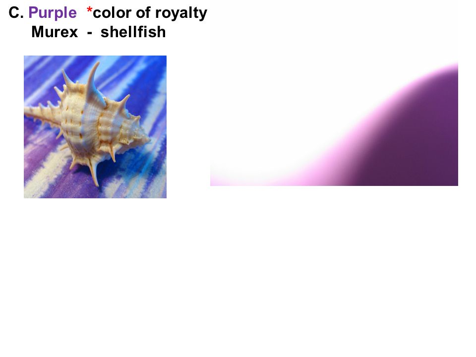 C. Purple *color of royalty Murex - shellfish