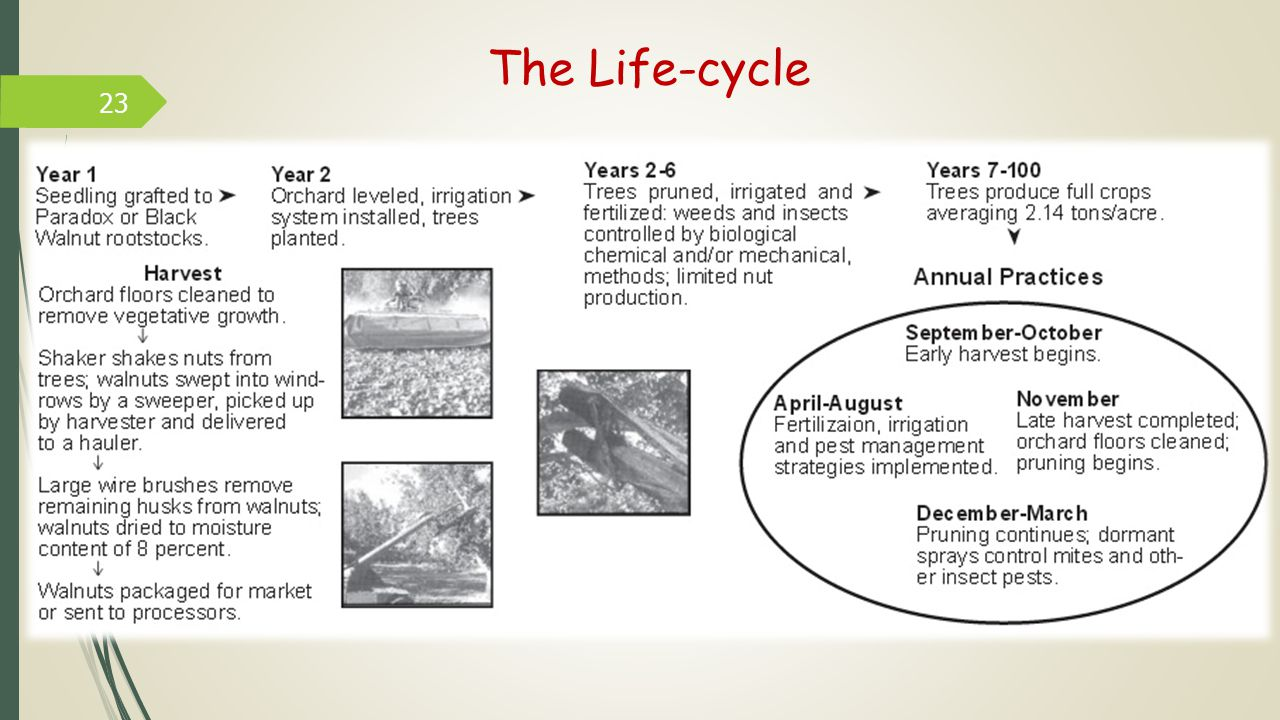 23 The Life-cycle