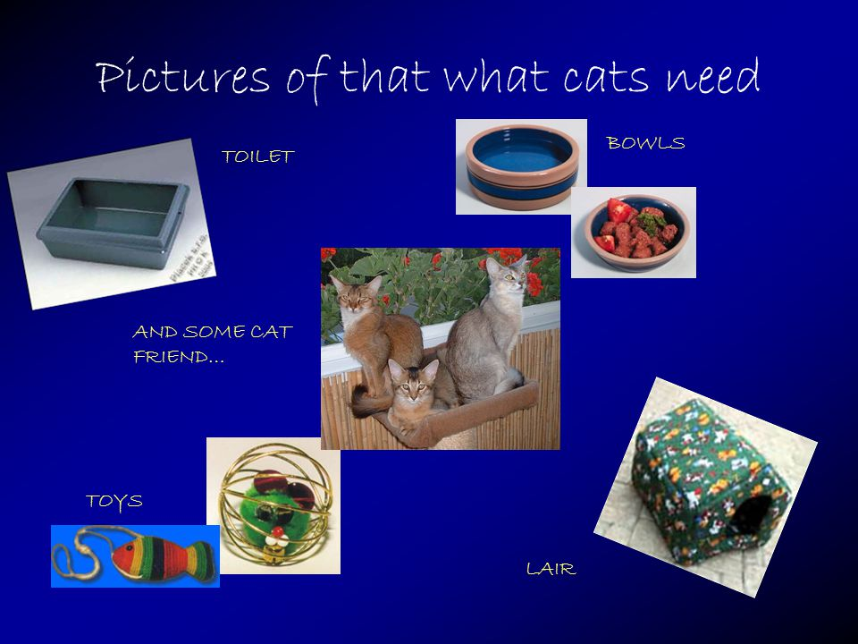 Pictures of that what cats need TOYS LAIR BOWLS TOILET AND SOME CAT FRIEND…