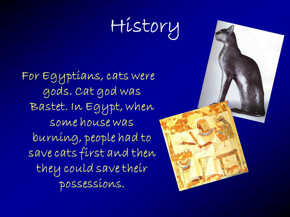 History For Egyptians, cats were gods. Cat god was Bastet.