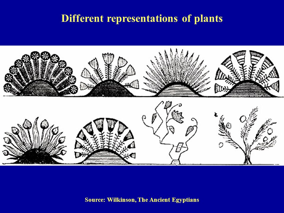 Source: Wilkinson, The Ancient Egyptians Different representations of plants