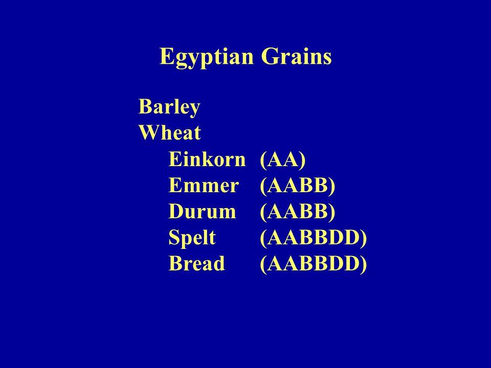 Barley Wheat Einkorn(AA) Emmer(AABB) Durum(AABB) Spelt(AABBDD) Bread(AABBDD) Egyptian Grains