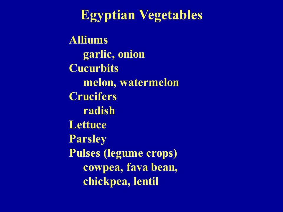 Alliums garlic, onion Cucurbits melon, watermelon Crucifers radish Lettuce Parsley Pulses (legume crops) cowpea, fava bean, chickpea, lentil Egyptian Vegetables