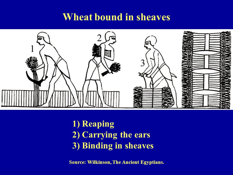 Source: Wilkinson, The Ancient Egyptians.
