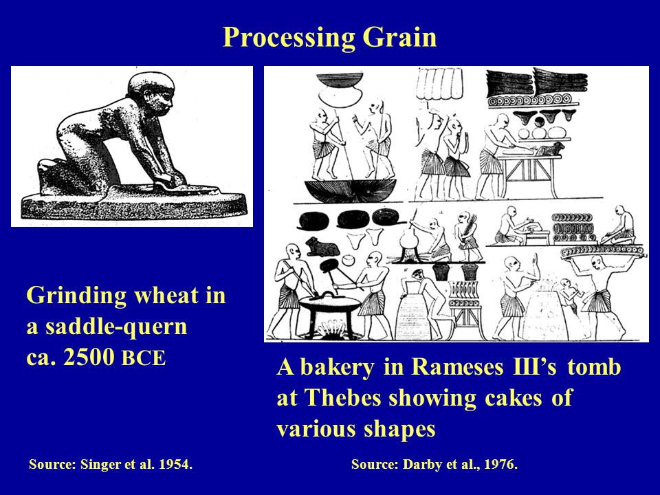 Grinding wheat in a saddle-quern ca.2500 BCE Source: Singer et al.