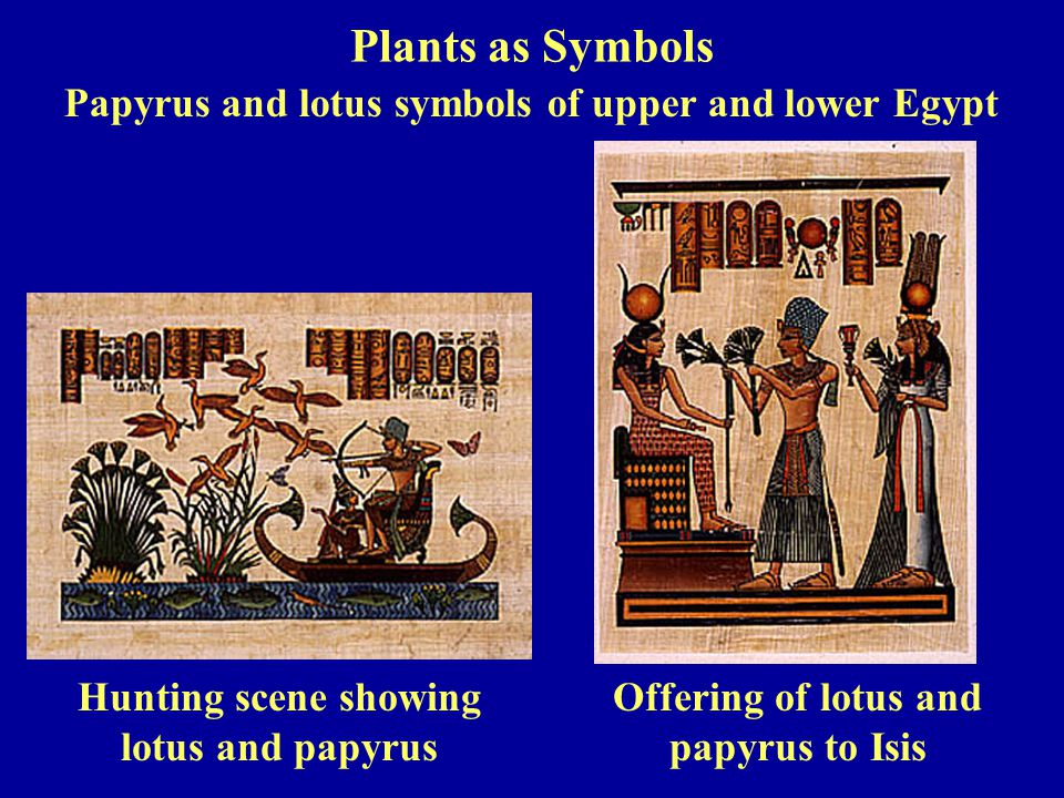 Hunting scene showing lotus and papyrus Offering of lotus and papyrus to Isis Papyrus and lotus symbols of upper and lower Egypt Plants as Symbols