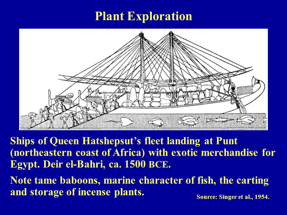 Ships of Queen Hatshepsut's fleet landing at Punt (northeastern coast of Africa) with exotic merchandise for Egypt.