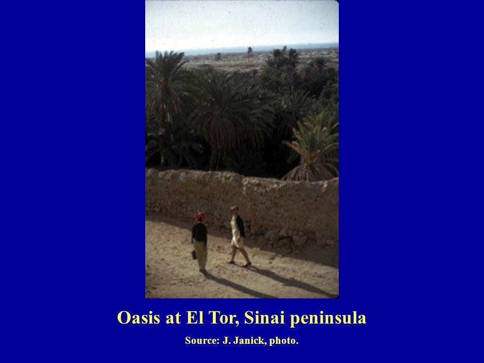 Source: J. Janick, photo. Oasis at El Tor, Sinai peninsula