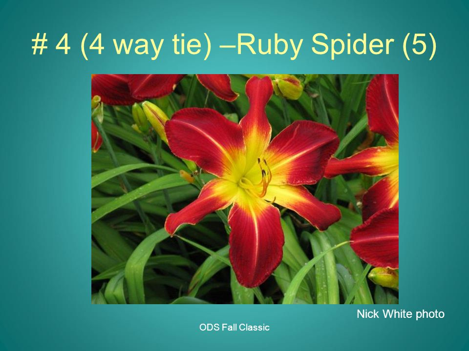 # 4 (4 way tie) –Ruby Spider (5) ODS Fall Classic Nick White photo
