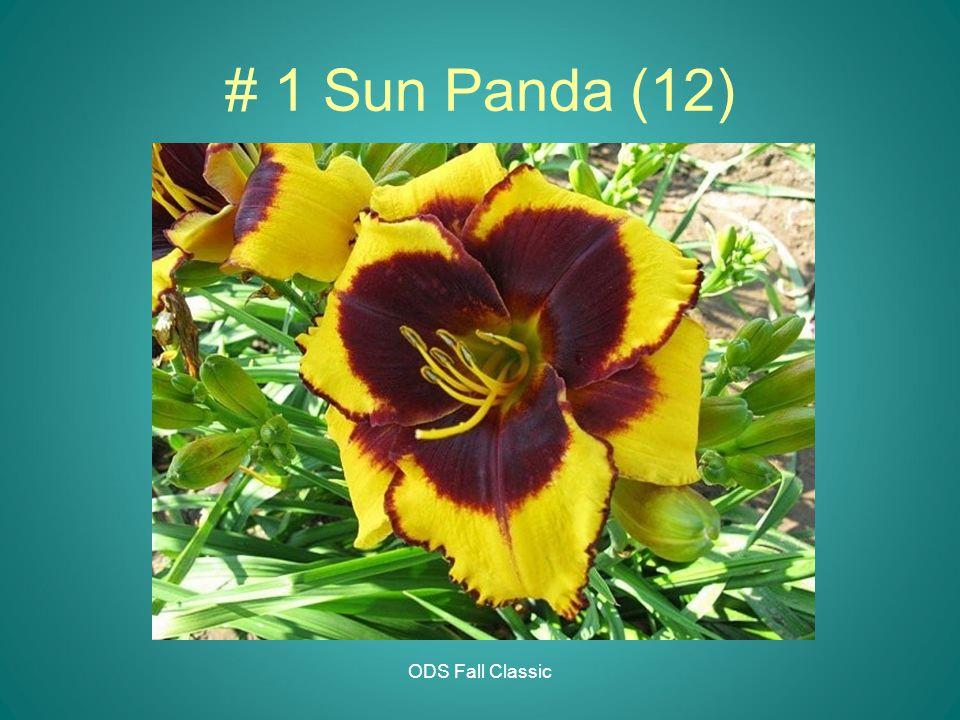 ODS Fall Classic # 1 Sun Panda (12)