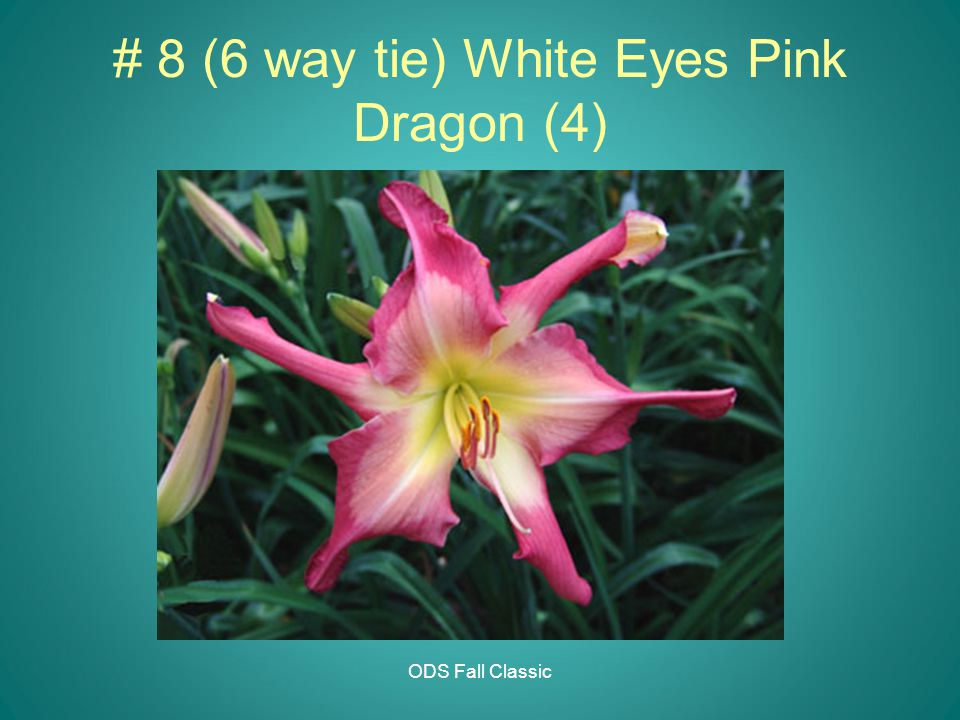 ODS Fall Classic # 8 (6 way tie) White Eyes Pink Dragon (4)