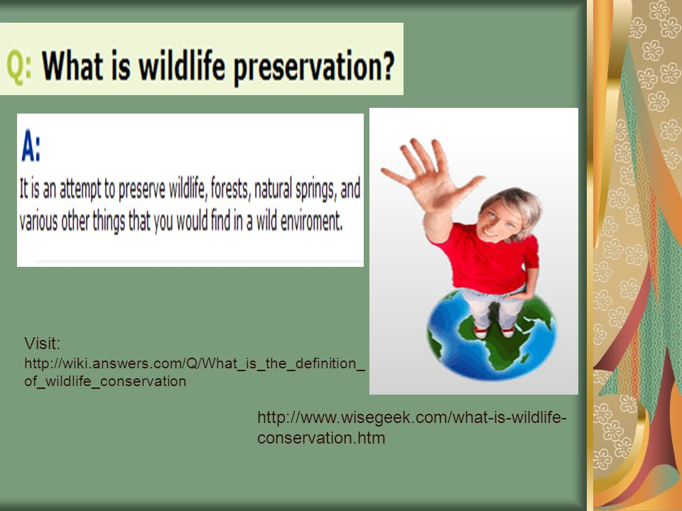 Why is Wildlife Conservation Important.