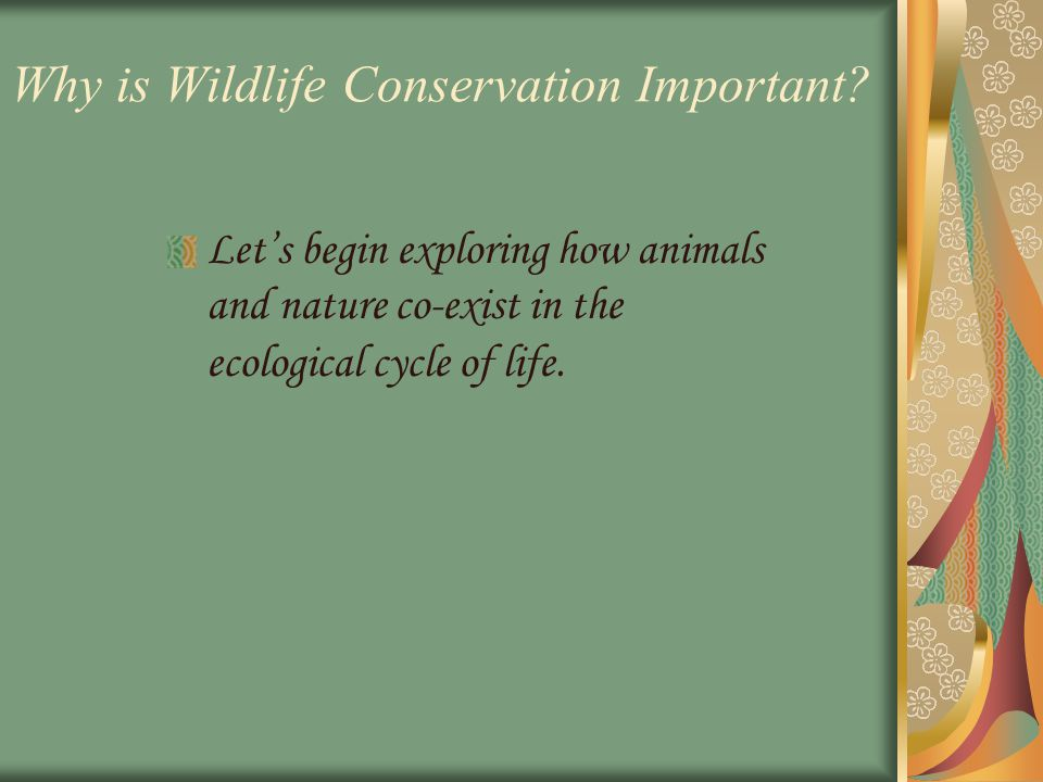 Animals and plants co-exist within ecological cycle of life.