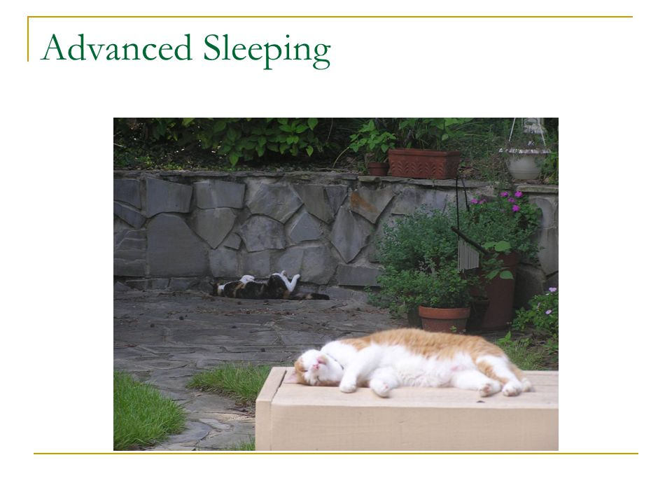 Advanced Sleeping