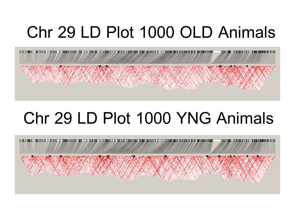 Chr 29 LD Plot 1000 OLD Animals Chr 29 LD Plot 1000 YNG Animals