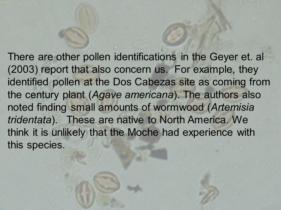 There are other pollen identifications in the Geyer et. al (2003) report that also concern us. For example, they identified pollen at the Dos Cabezas