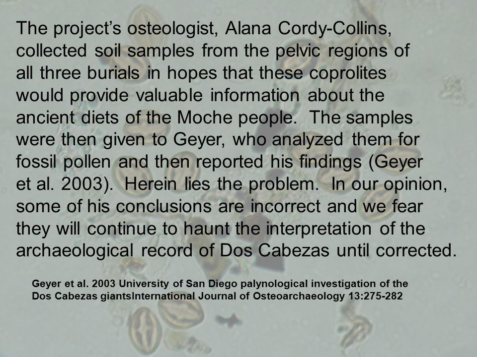 The project's osteologist, Alana Cordy-Collins, collected soil samples from the pelvic regions of all three burials in hopes that these coprolites would provide valuable information about the ancient diets of the Moche people.