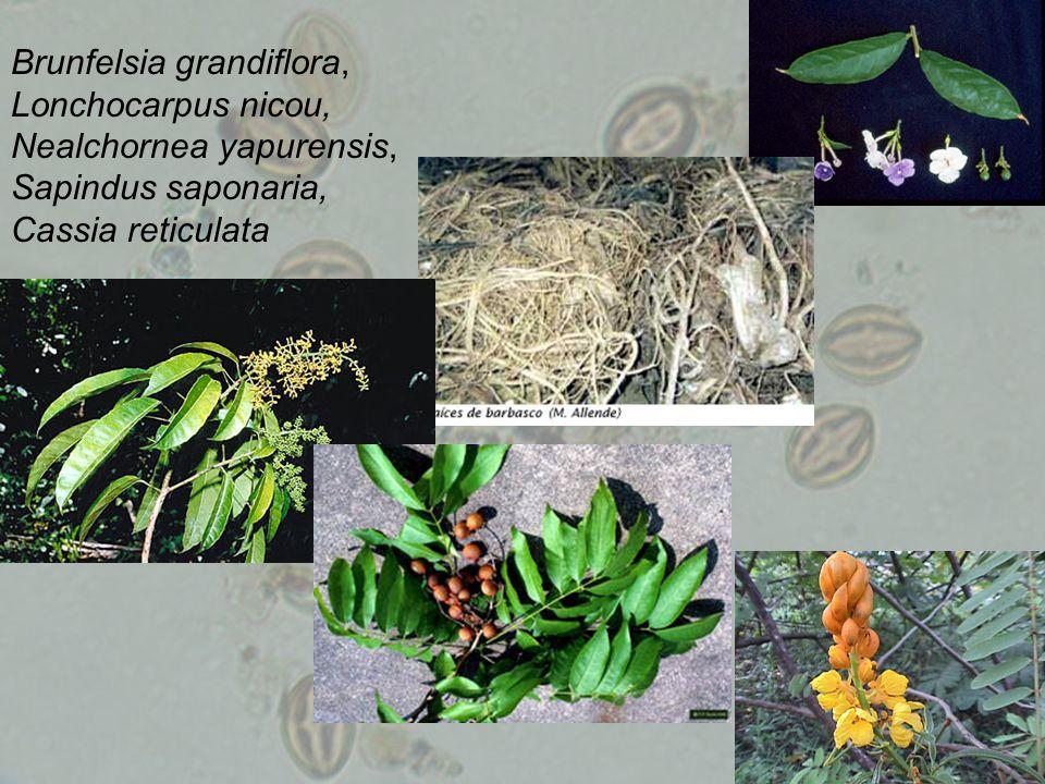 Brunfelsia grandiflora, Lonchocarpus nicou, Nealchornea yapurensis, Sapindus saponaria, Cassia reticulata
