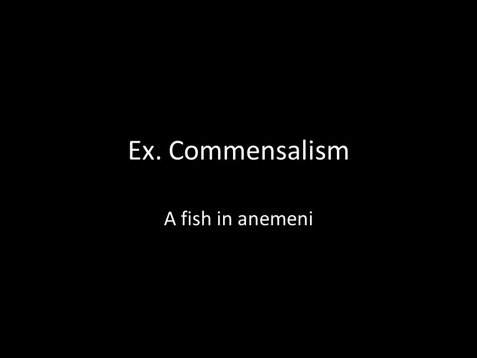 Ex. Commensalism A fish in anemeni